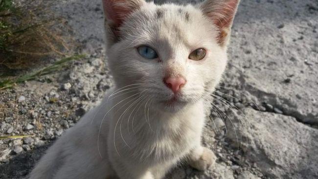 Красноярські рятувальники визволили кошеня, який застряг на безлюдному острові