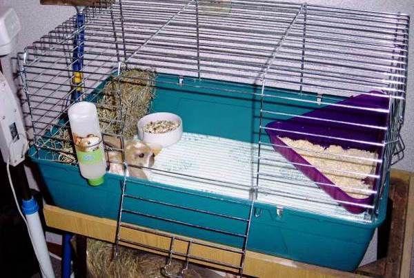 Кролячий будиночок - робимо самі клітини для декоративних порід