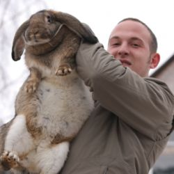 Чоловік і кролик