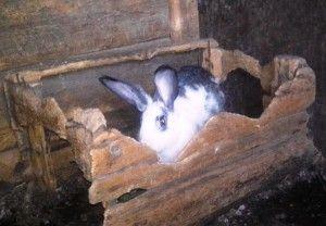Кролики гризуть клітку - що робити?