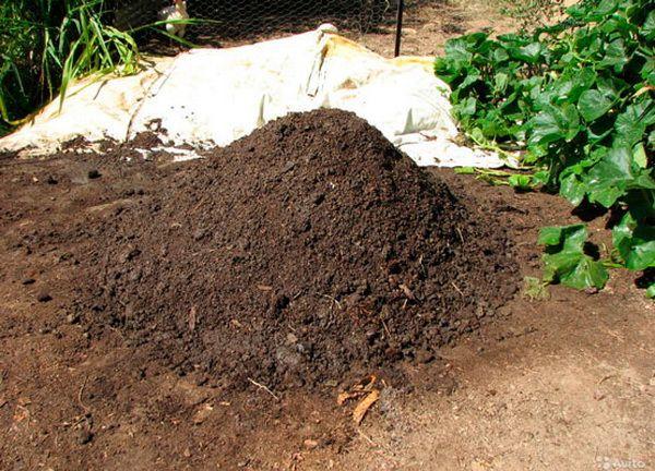 Купа курячого компосту у дворі