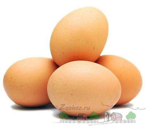 Курячі яйця фото