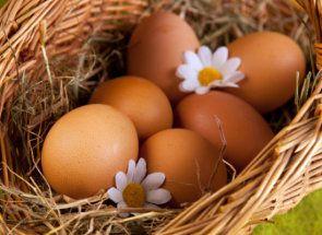 Кури-рекордсмени з виробництва яєць - браун нік