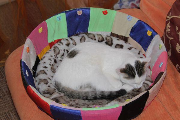 Ласощі для кішок green qzin грайливість