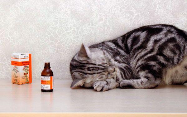 Ліки чи отрута: чому кішки люблять валер`янку