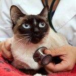 Ліарсін для кішок