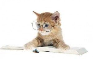 Лінзи для кішок