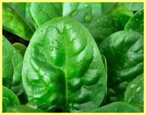 Листя шпинату корисні властивості