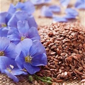 Льон (насіння льону): історія, застосування. Переваги лляної одягу