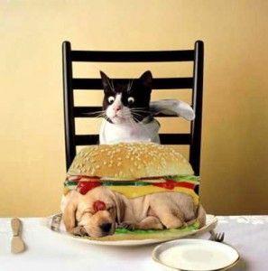 Улюблені ласощі для кішок