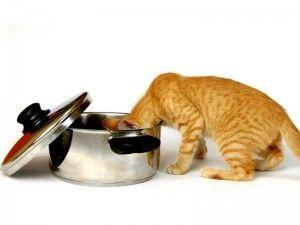 цікавість кішки