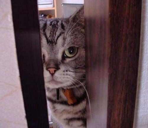 цікава кішка