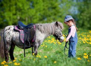Коники родом з дитинства - поні