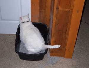 Туалет для кішок