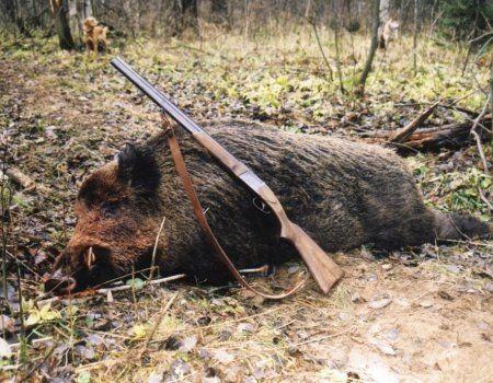 Краща зброя для полювання на великого звіра