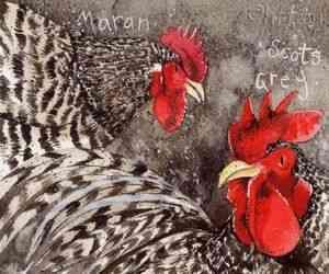 Яєчна порода курей Хайсекс Уайт була виведена голландськими селекціонерами.