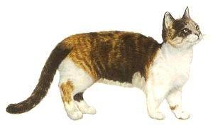 Манчкин (Кошка-такса)