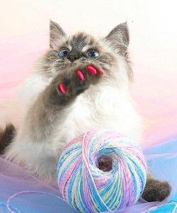 Манікюр для кішки