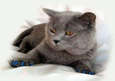 Антіцарапкі - м`які ковпачки для кішок