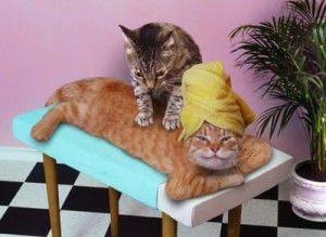 Масаж для кішки
