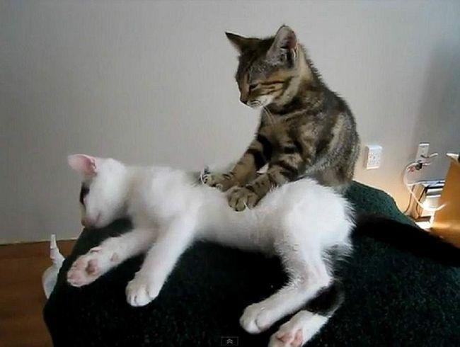 Люди, Гладячий своїх кішок, бувають здоровіше і менше схильні до стресів.