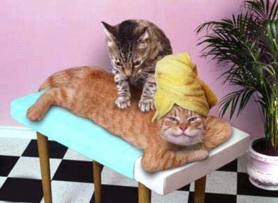Масажер для кішки