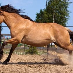 Саврасов кінь в бочці