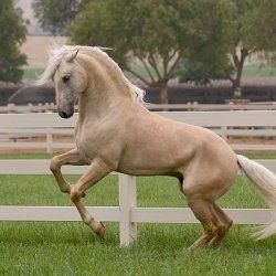 Соловйов кінь в загоні