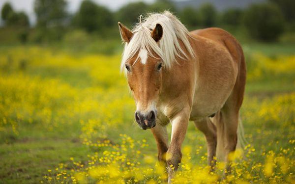 Кінь на лузі