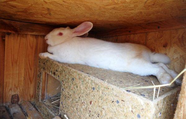 Маточник для кроликів - робимо самі