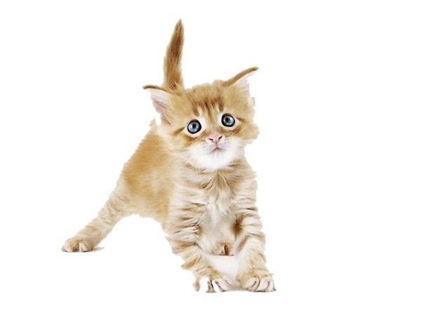 Меню для кошеняти