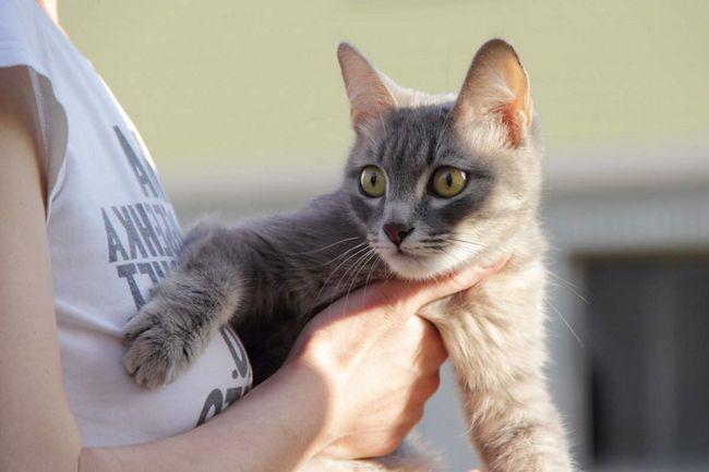 Методи боротьби зі стресом у кішок і препарати, що допомагають заспокоїти тварину