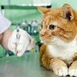 Метронідазол для кішок