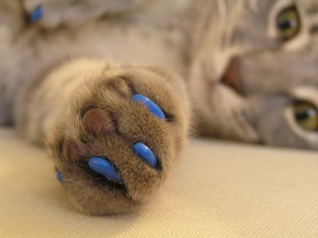 М`які кігтики для кішки