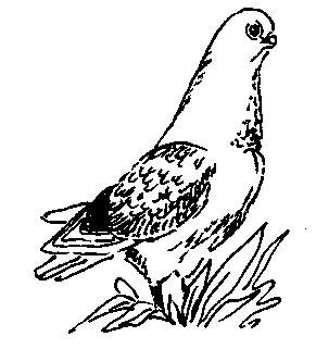 М`ясні голуби