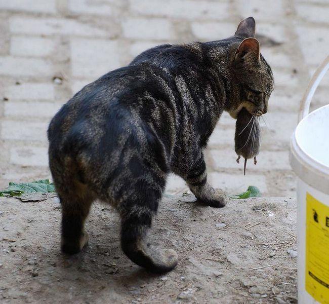 Свою назву кішки отримали виходячи з місця проживання