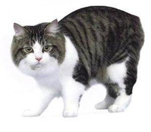 Менська кішка