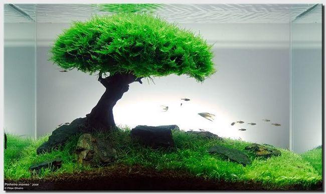 Мох в декорі акваріума