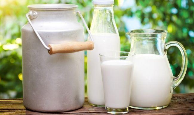 Молочні ріки: все про продуктивність корів
