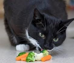Кішці потрібні вітаміни