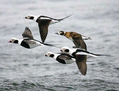 Морянки в польоті