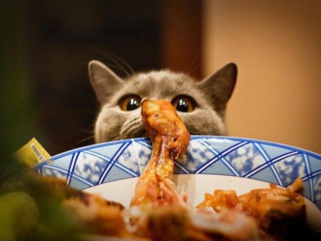Кот дивиться на ласощі