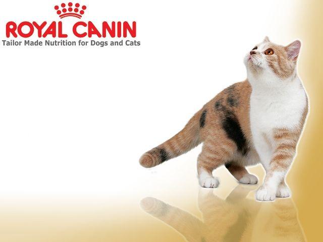 Плямиста кішка з логотипом Роял Канін