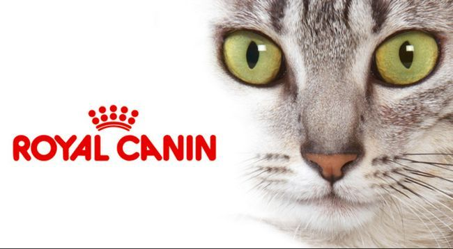 Роял Канін для котів