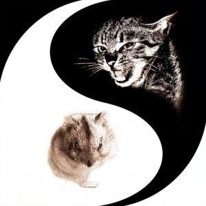 Мишки для кішки