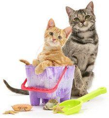 На дачу з кішкою