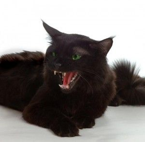 На кого шипить кішка