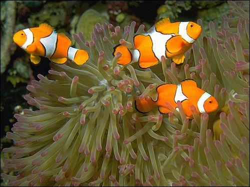 Надклас риби (pisces)