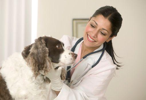 Найбільш поширені захворювання собак і способи їх лікування
