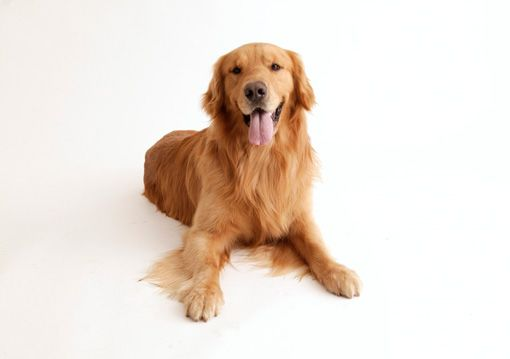 Собака, про яку дбають